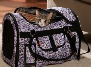 Soft-Cat-Carrier-Prefer-Pets-Pictures-340x252