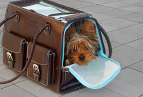 soft-sided-pet-carrier_294x200
